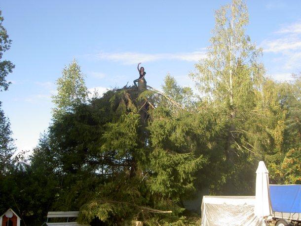 mela på träd